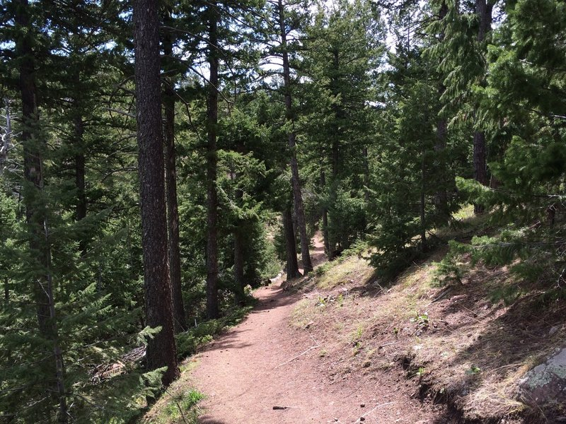 A pretty forested section of the Green Mountain West Ridge Trail