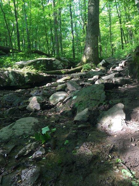 Small stream that runs down Certain Trail