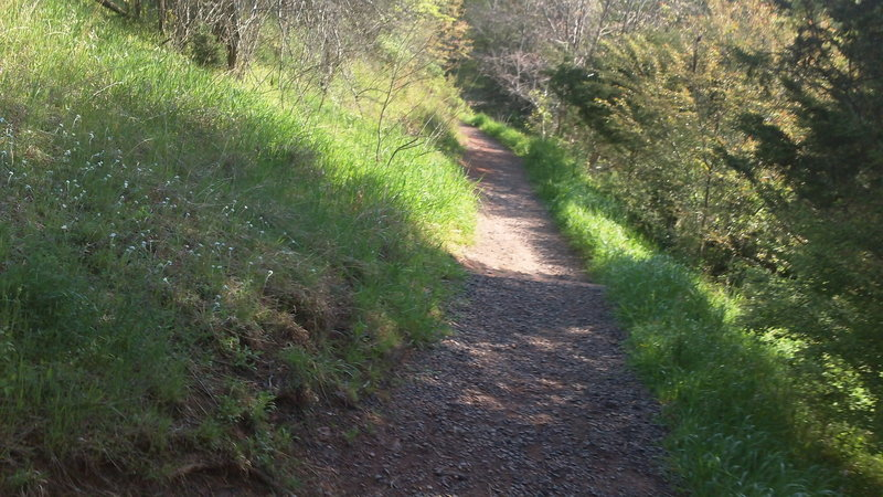 On the way to the footbridge.  Running up this path is more fun than down....