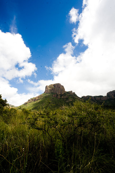 Looking up from the Chisos Basin.