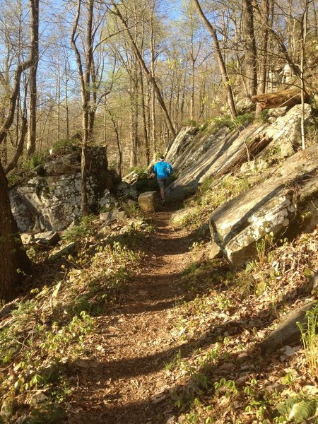 Some stone cuts on the Mountain Mist Trail