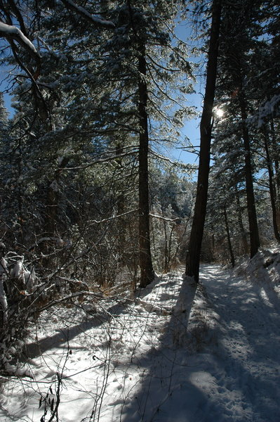 Trees in the snow on the Gregory Canyon Trail.