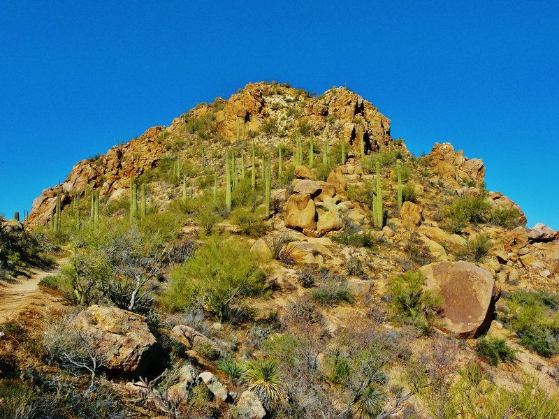 Hugh Norris Trail #8