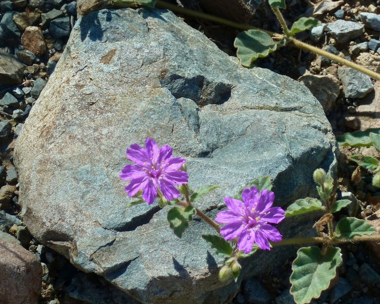 Tiny Lavender Flowers
