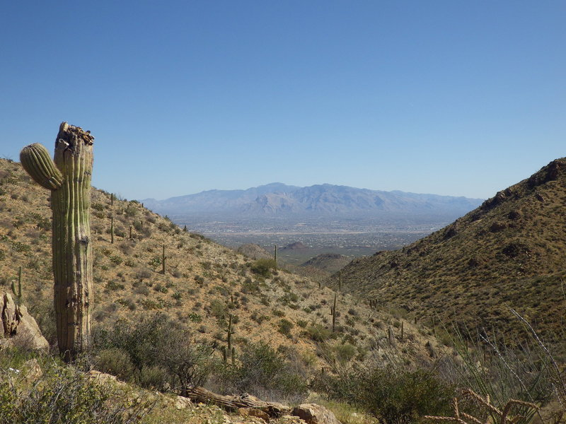 Looking back through the canyon toward the Santa Catalina Mountains. Sweetwater Trail can be seen on the slope of the canyon wall to the right.