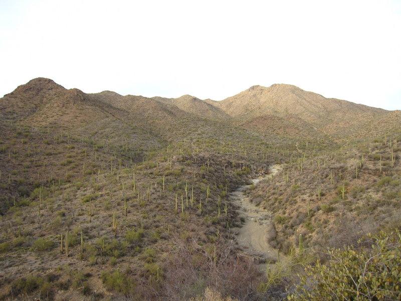 Tucson Mt