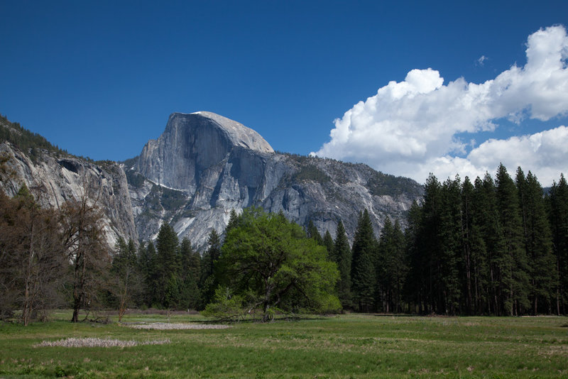Half Dome over the forests of the valley