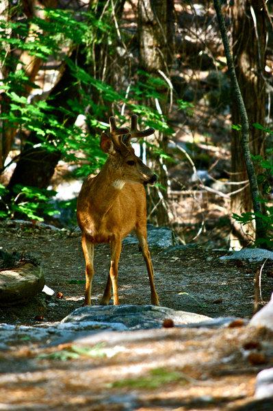 Meeting the deer in Yosemite Valley