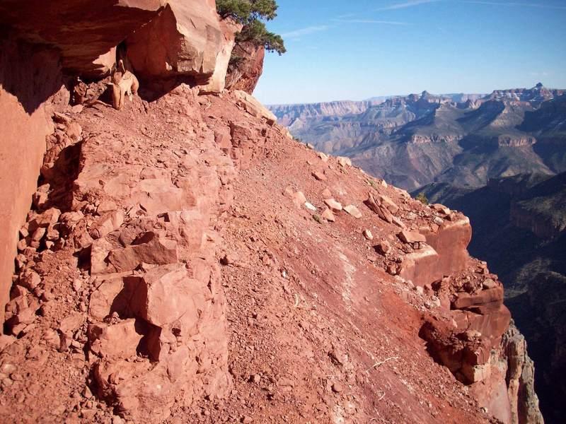 Nankoweap Trail Bad section