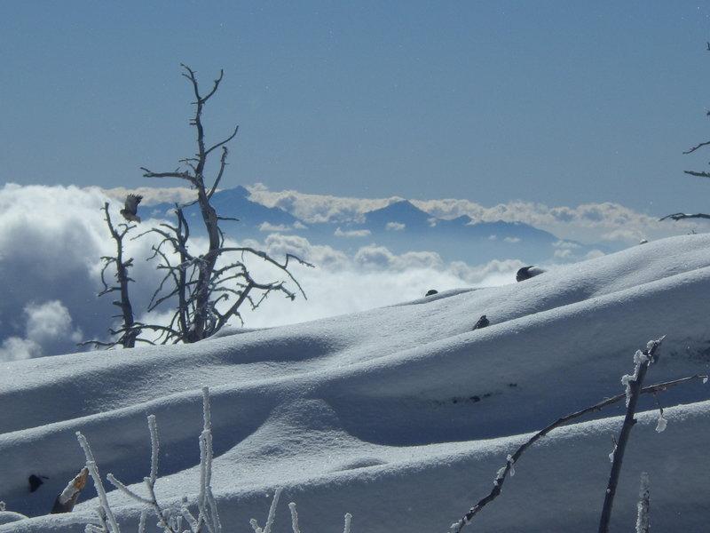 Near the summit of Mt. Lemmon looking south toward the Santa Rita Mountains.