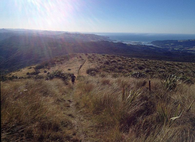 Views toward Blueskin Bay from Swampy Ridge