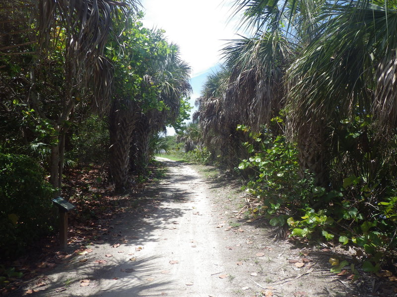 Portion of the trail lined with palm trees.