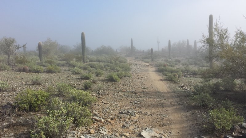 A rare run of foggy weather in the desert