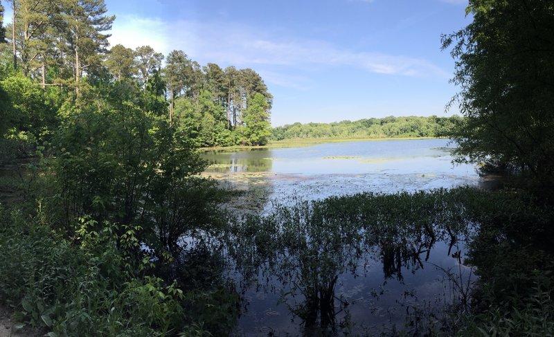 Blackwell Swamp