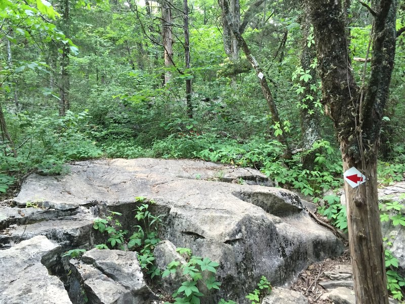 Large rocks that are a part of most all of the trails on Rainbow.  Can make it difficult to follow the trail at times.