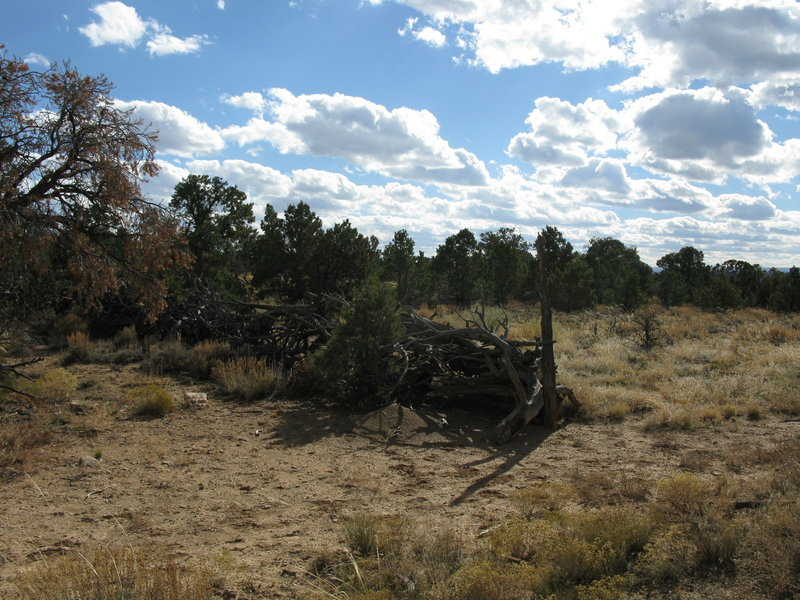 An old brush fence must have taken many hours to construct and leaves us wondering about early cowboys that probably lived and camped nearby.