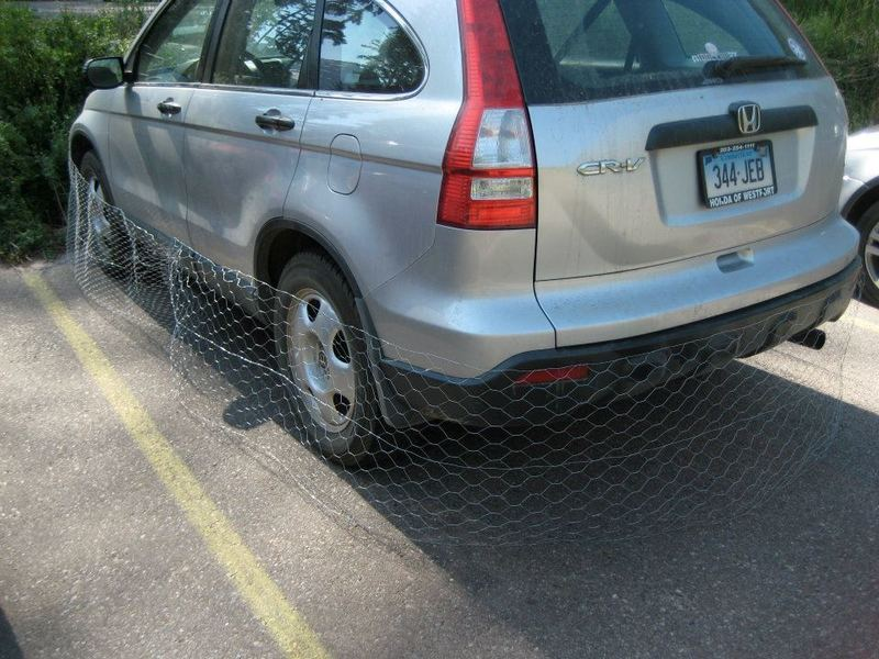 Chicken wire: good protection against porcupines chewing your brake lines to the tune of $1,500. A must for any camper; useless if just visiting for the day.