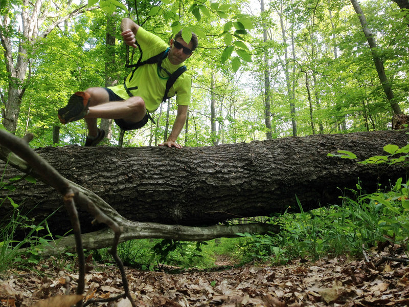 Hurdling one of the bigger downed trees across the Dry Prong. It was fun.