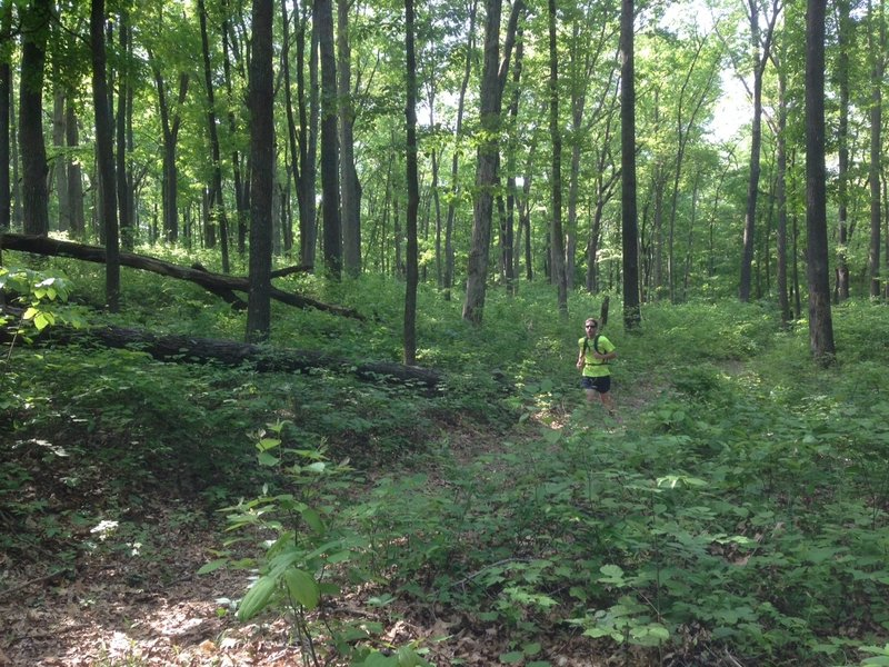Covering a typical section of the Dry Prong Trail. It's a nice diversion from the busy main trail.