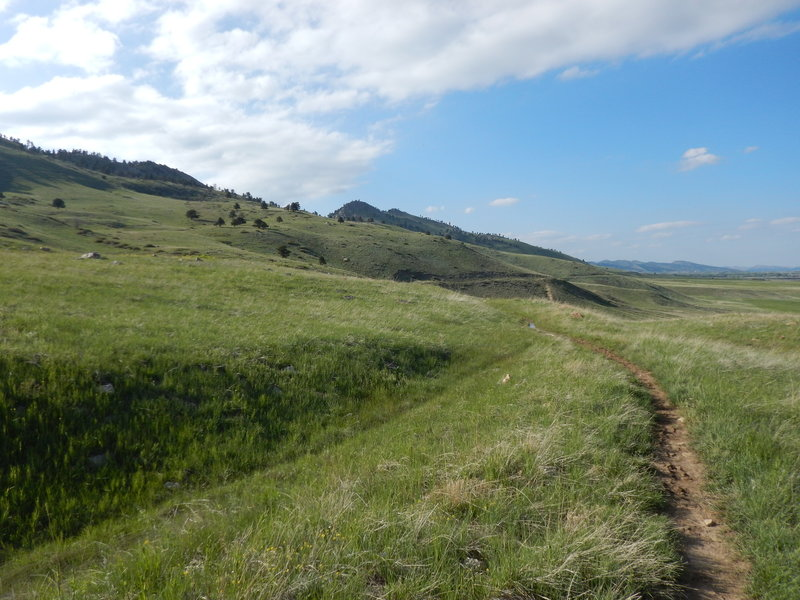 Typical rolling terrain on the Foothills Bench Trail