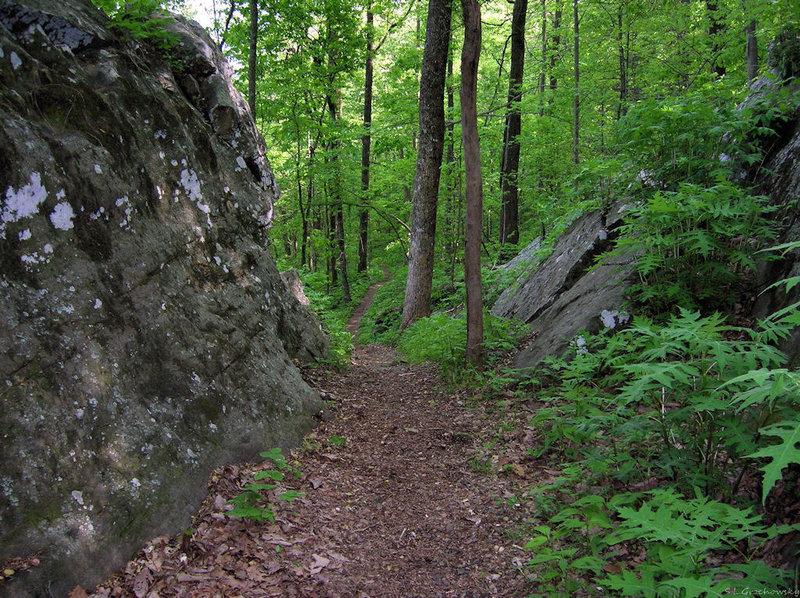 Limestone formations along Mountain Mist trail.