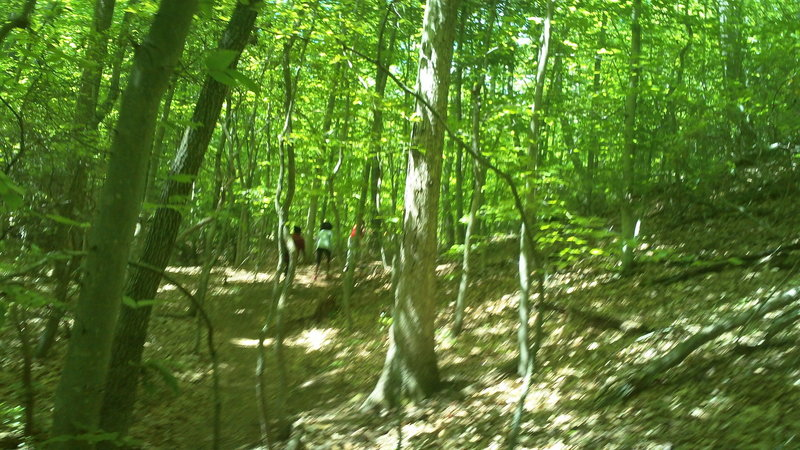 Just some woods and people on the Laurel Trail!