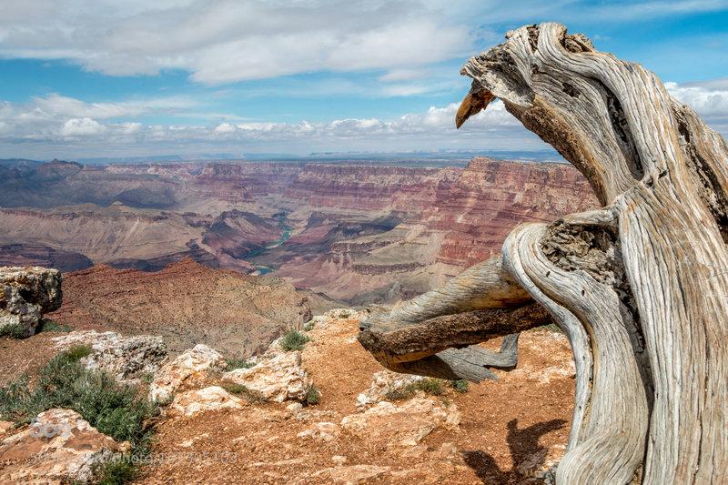 Grand Canyon view...
