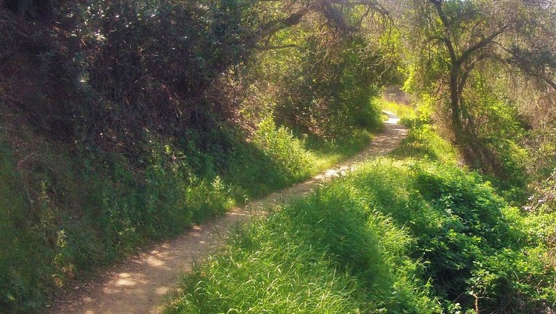 These switchbacks on the Schabarum Trail Extension are a highlight of this area