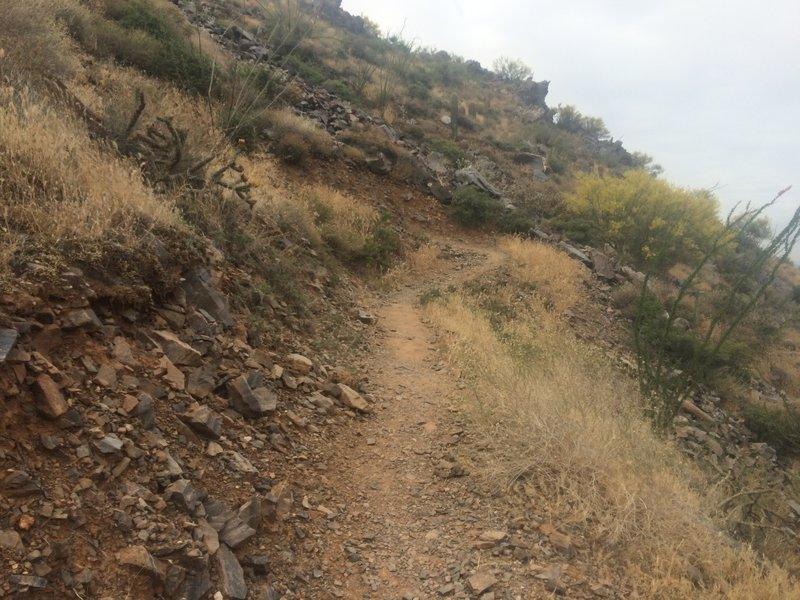 Uphill charge on the Tom Thumb Trail