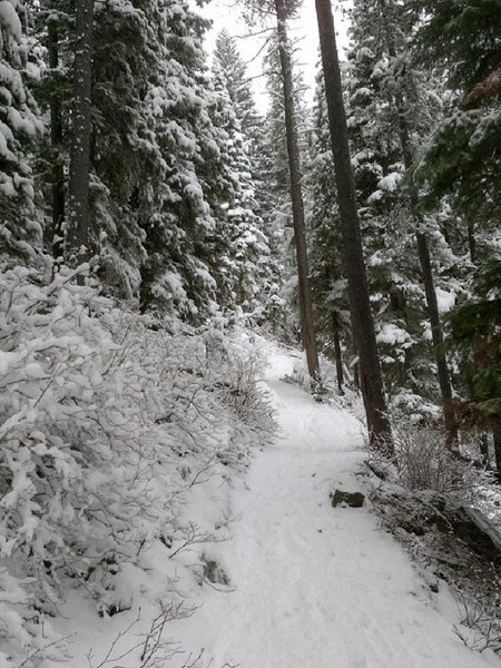 Trail leading to Lava Lake. This is in early May.