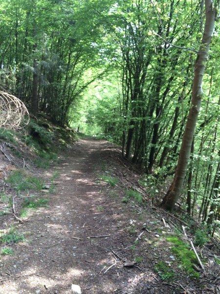 Easiest part of the Trail de la Lesse
