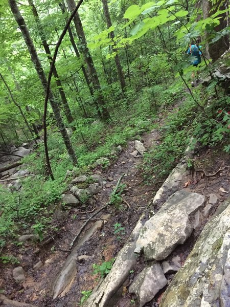 Nasty technical downhill on Natural Well Trail
