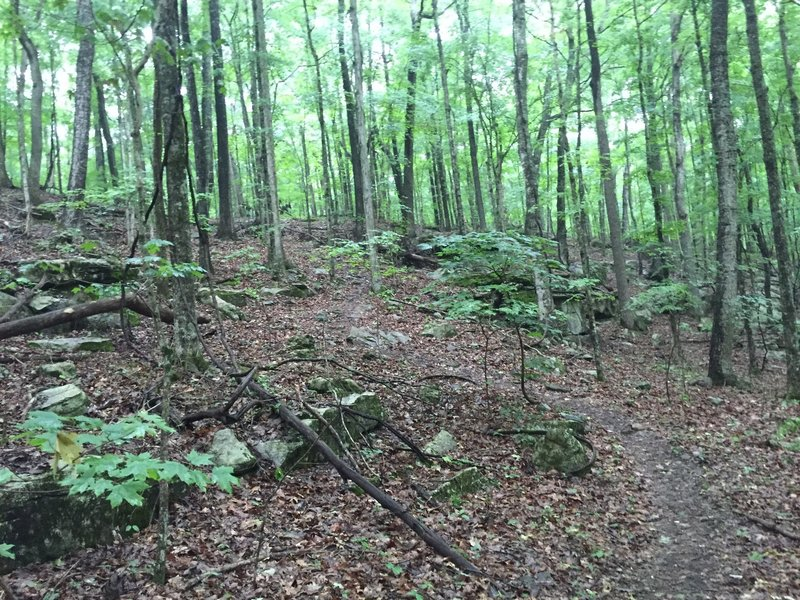Big Cat Track.  A difficult bit of trail.