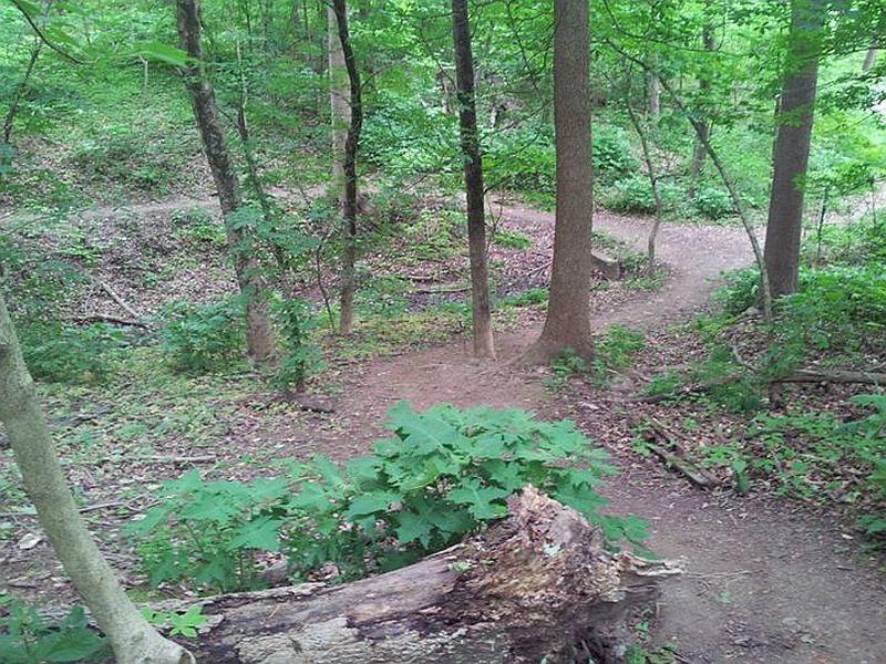 Cherokee Park trails.