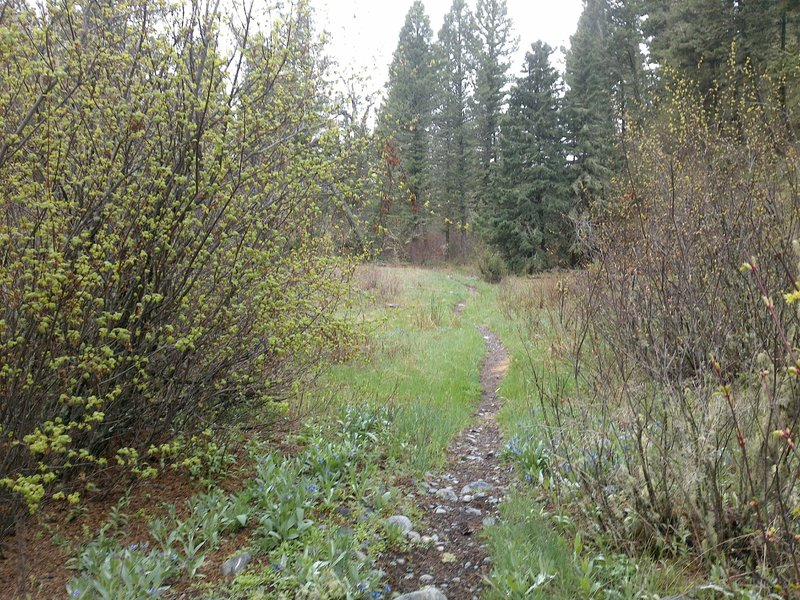Section of trail winding through a riparian meadow.