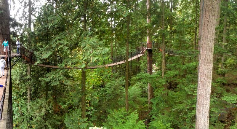 Treetops Experience
