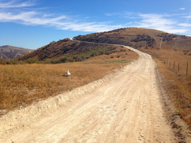 Don't miss the turn off the dirt road to the singletrack trail.