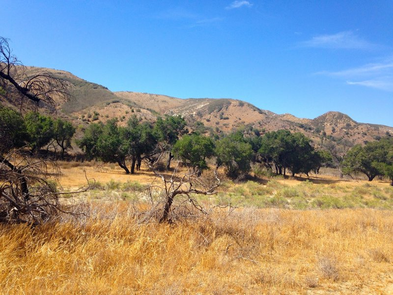 The bottom of the trail is pretty typical California chaparral.