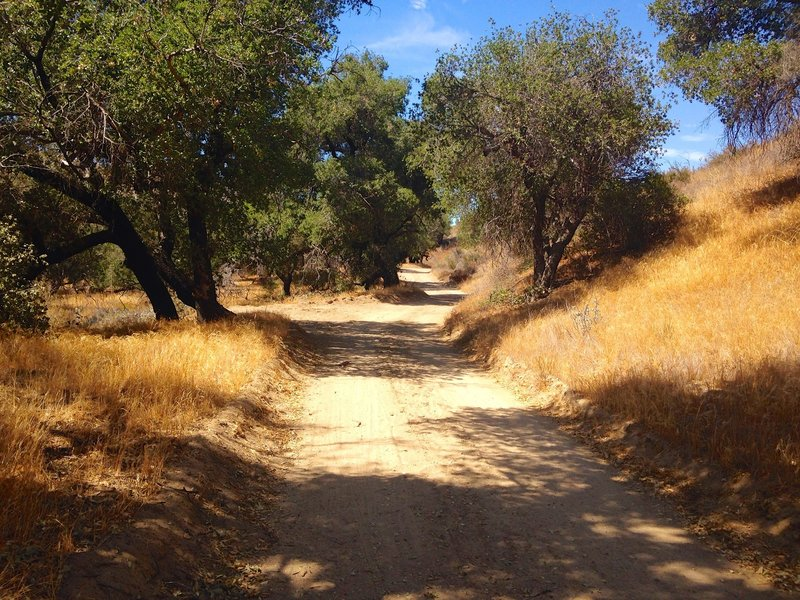 The bottom section of the trail provides a lot more shaded areas to hike along.