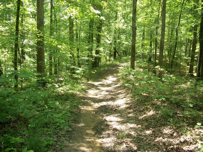Zaleski Backpacking Trail