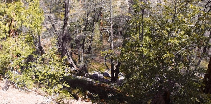 Looking down into the creek from the trail