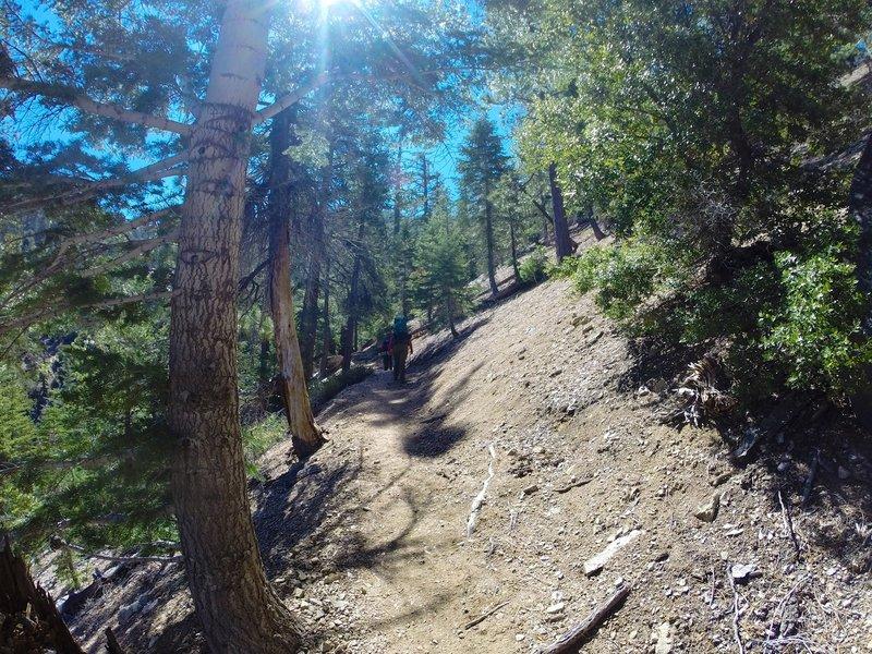 The climb to Buckhorn Campground