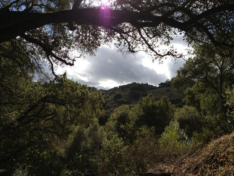 View from the trail through the trees