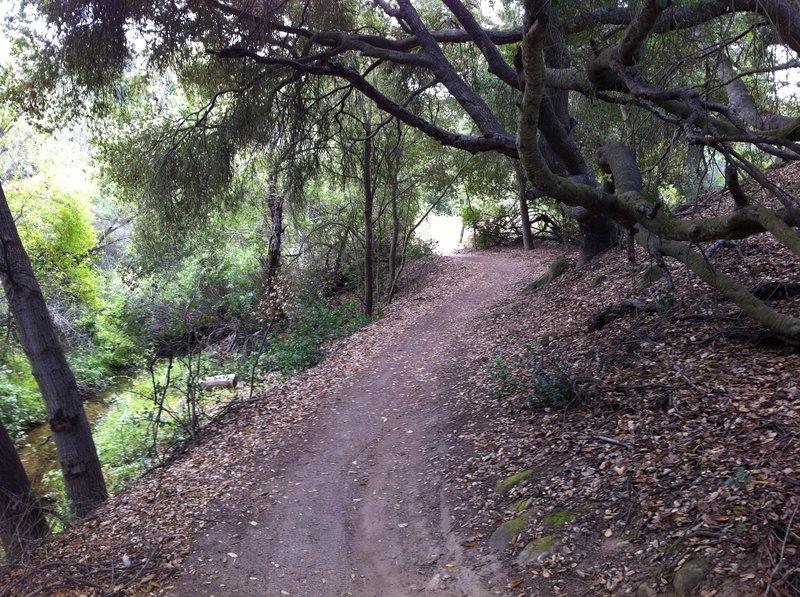 Coyote Run in Aliso Woods.  Wood Creek is on the left.