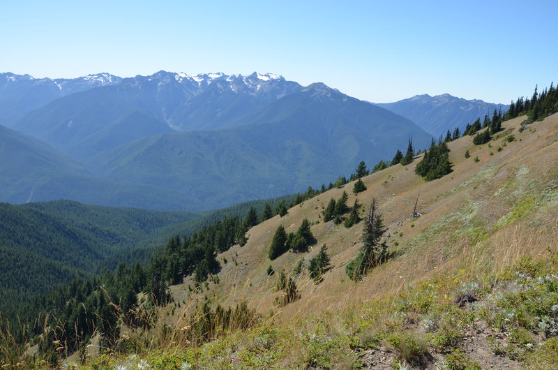 Wonderful views along the Hurricane Ridge