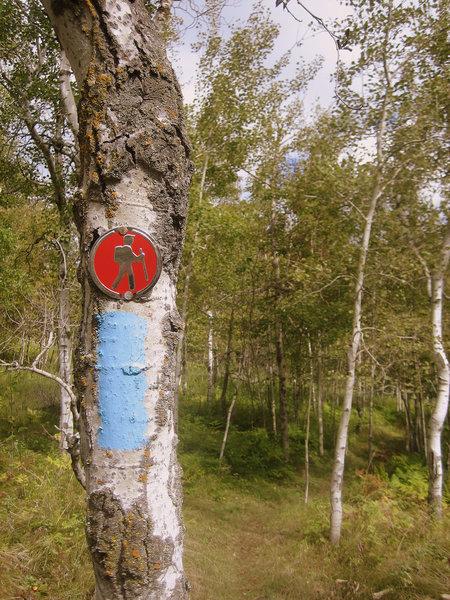 A blue blaze of the SHT (Superior Hiking Trail).