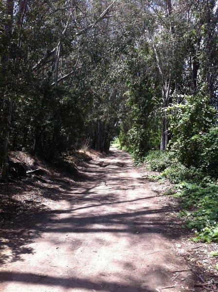 Mud Run Trail