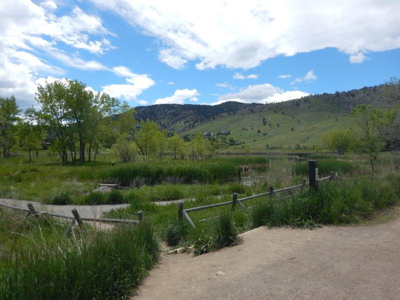 The wonderful wetlands of Wonderland Lake