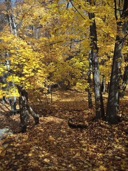Glen Onoko in fall.