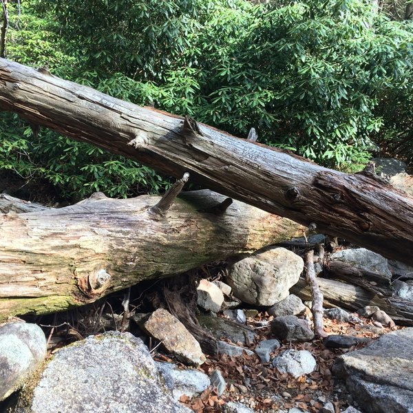 Downed trees are a common sight here.